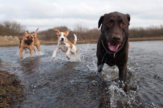 Kwispel-Arrangement (incl. verblijf 1 hond)